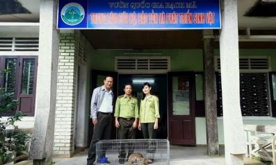 Trung tâm Cứu hộ bảo tồn và Phát triển sinh vật Vườn quốc gia Bạch Mã tiếp nhận cá thể Mèo rừng từ Hạt kiểm lâm thành phố Huế
